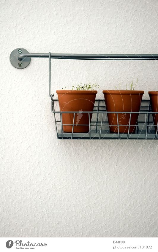 hanging herbs Kitchen Herbs and spices Sterile Suspended Wall (building) White Pot Basket Portrait format Gastronomy Decoration clean Simple white wall