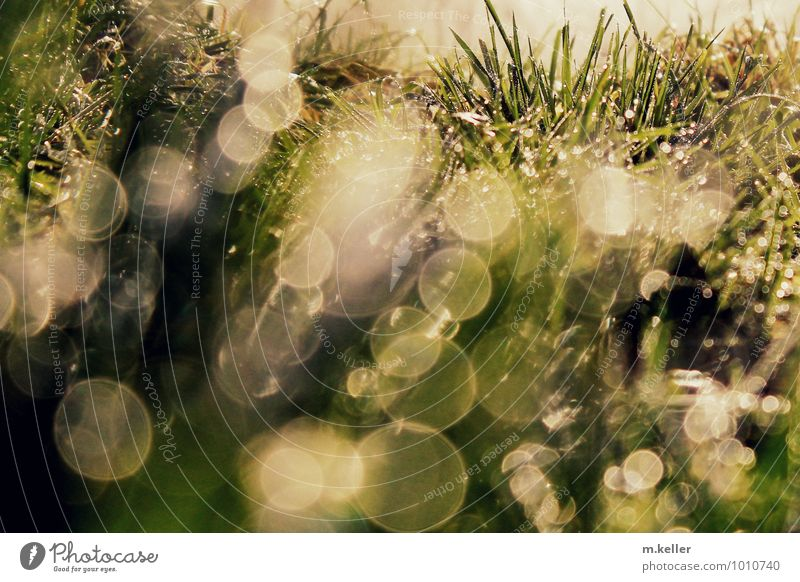 Water drops in the grass Nature Earth Drops of water Grass Relaxation Glittering To enjoy Dream Joy Contentment Euphoria Calm Adventure Movement