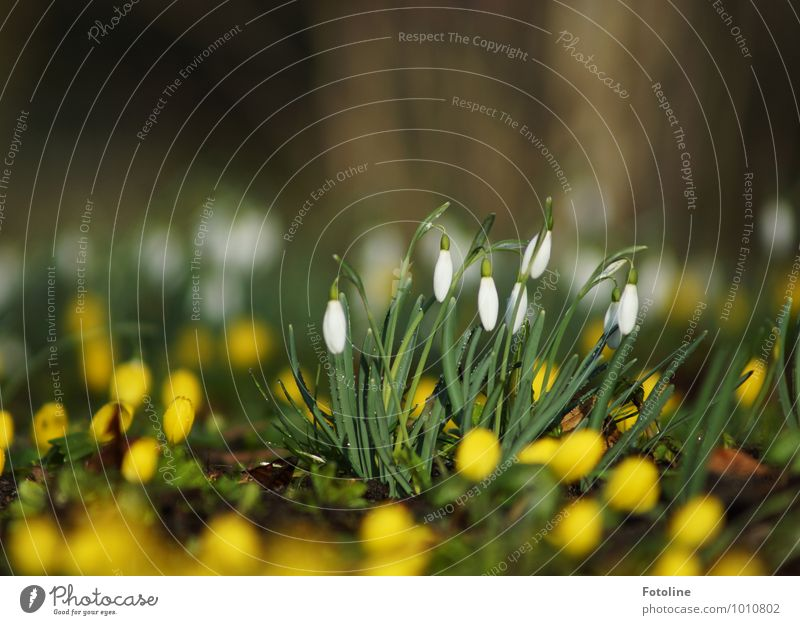 Nature Plant Green White Flower Landscape Environment Yellow Blossom Spring Small Garden Bright Park Beautiful weather Spring fever
