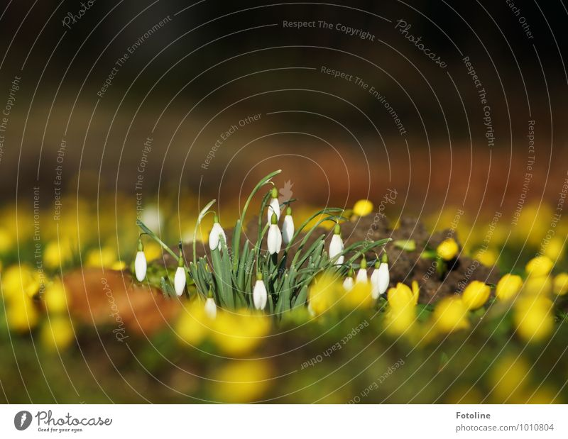 spring awakening Environment Nature Plant Elements Earth Spring Beautiful weather Flower Garden Park Bright Near Natural Yellow Green White Spring flower