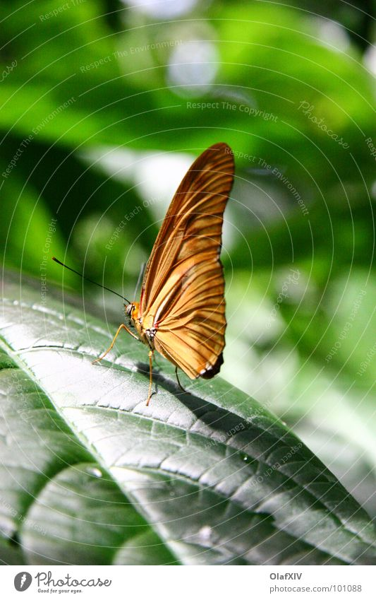 Green Beautiful Colour Leaf Calm Warmth Feet Contentment Sit Wing Serene Butterfly Virgin forest Depth of field Feeler