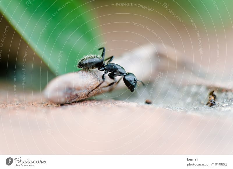 over stick and stone Environment Wild animal Ant Insect 1 Animal Going Exceptional Gigantic Glittering Large Green Black Crawl Colour photo Subdued colour