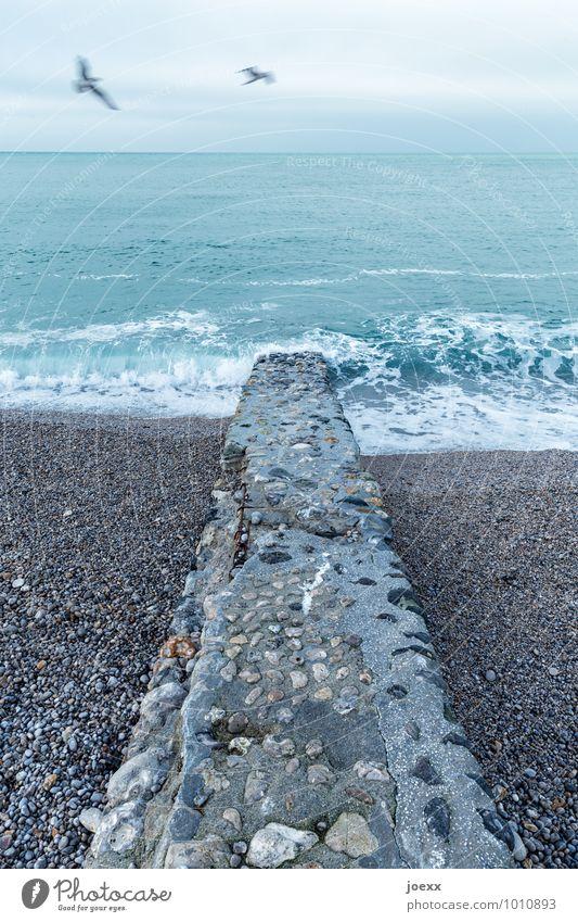 One million memories Elements Water Sky Clouds Horizon Bad weather Wind Waves Coast Beach Ocean Wall (barrier) Wall (building) Bird Seagull 2 Animal Stone