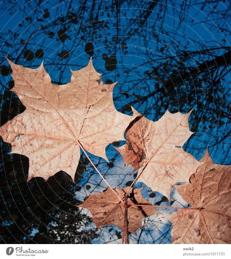 Sky Nature Plant Blue Tree Leaf Calm Clouds Black Environment Orange Growth Idyll Transience Change Near
