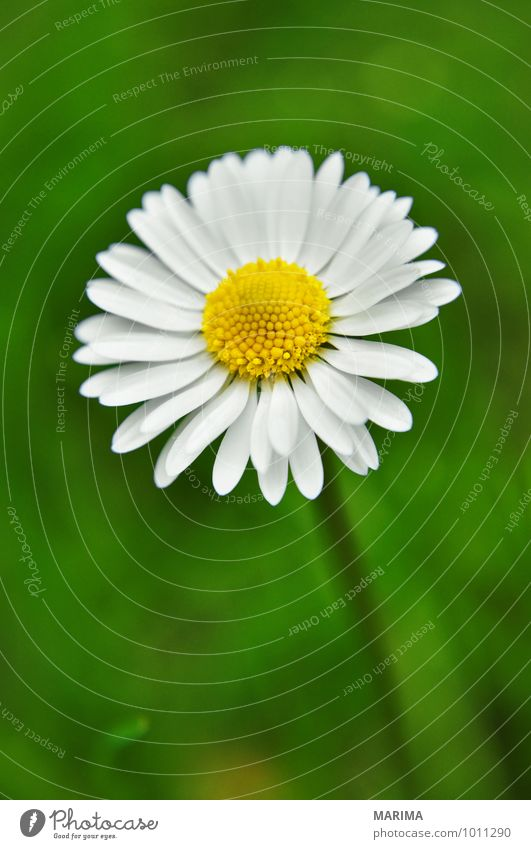 detail of a white daisy Calm Garden Environment Nature Landscape Plant Flower Grass Blossom Park Growth Fresh Green White outside organic Biological