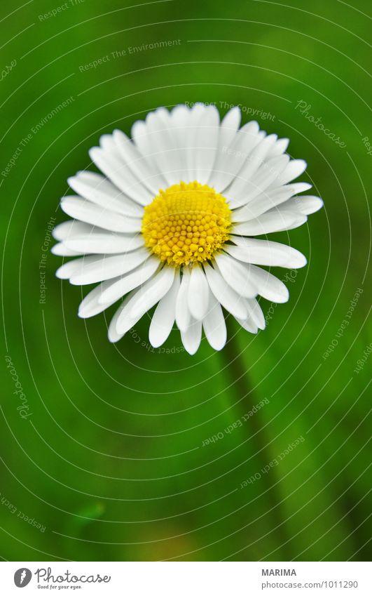Nature Plant Green White Flower Landscape Calm Environment Grass Blossom Garden Park Growth Fresh Planning Botany