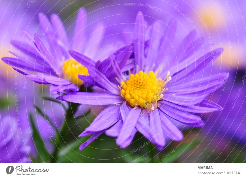 Nature Plant Summer Flower Landscape Calm Environment Autumn Blossom Garden Park Growth Fresh Planning Violet Botany