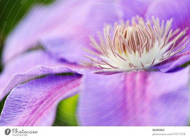 Nature Plant Flower Landscape Calm Environment Blossom Garden Park Growth Fresh Planning Violet Botany Organic Lilac
