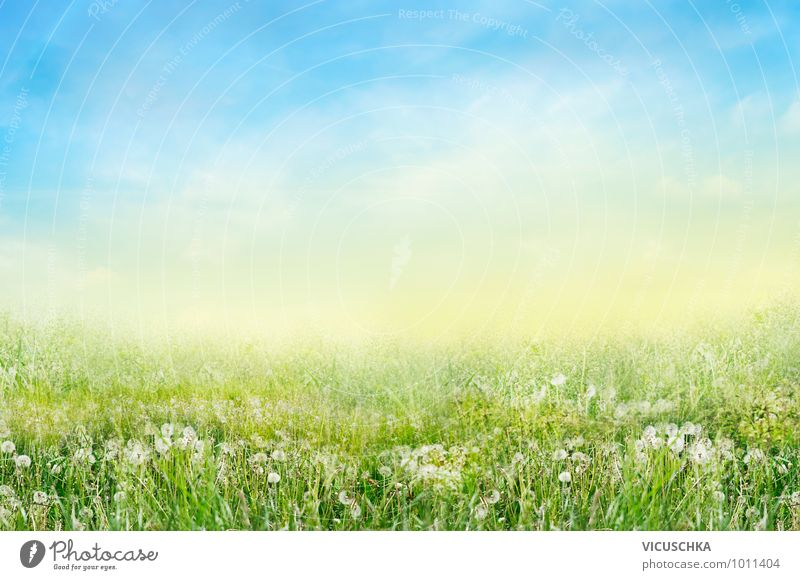 Meadow with white Lowenzahn flowers Design Garden Environment Nature Sky Spring Summer Beautiful weather Flower Park Field Jump Dandelion White Summer's day