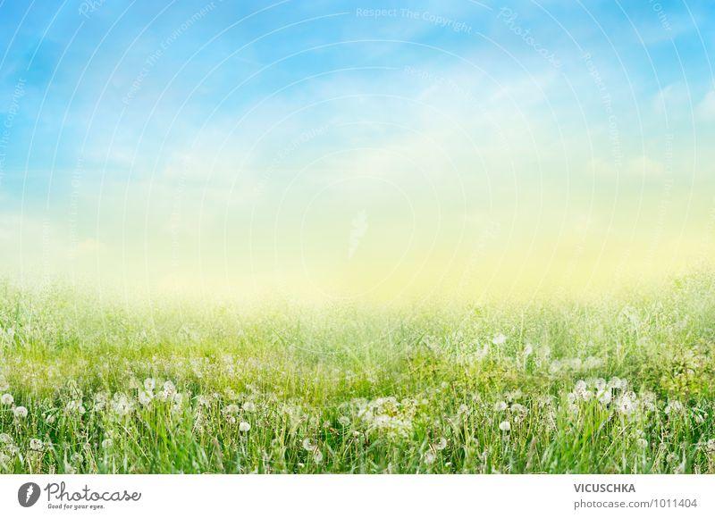 Sky Nature White Summer Flower Landscape Calm Environment Warmth Meadow Grass Spring Background picture Garden Jump Park