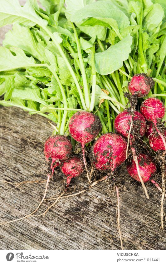 Harvest the first bundle of radishes in the garden. Food Vegetable Nutrition Style Design Garden Nature Bundle Radish Organic produce Ecological Gardening