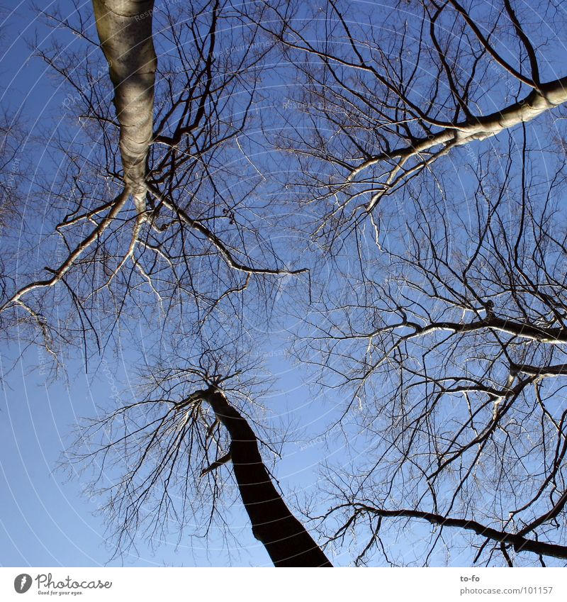 Sky Above Large Tall Level Upward Tree trunk Treetop Sky blue Beech tree Firmament