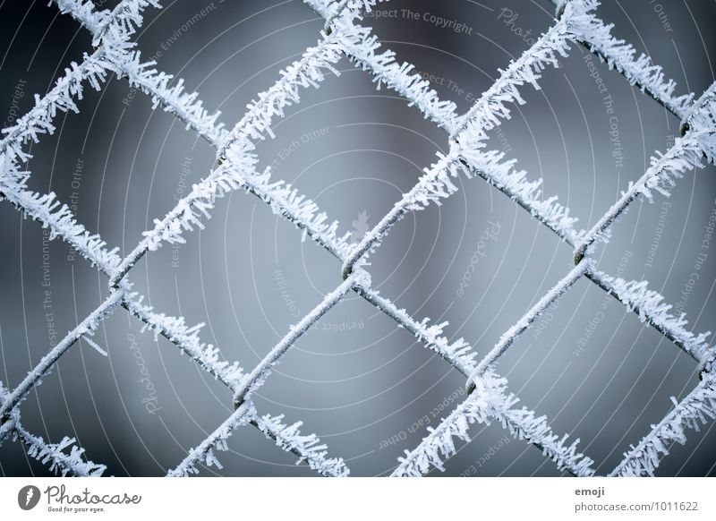 X Environment Nature Winter Ice Frost Snow Ice crystal Cold Blue Gray White Fence Colour photo Subdued colour Exterior shot Detail Pattern Structures and shapes