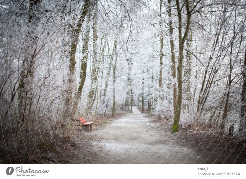 Frost Forest Environment Nature Landscape Winter Ice Tree Exceptional Cold Natural White Bench Colour photo Exterior shot Deserted Day Shallow depth of field