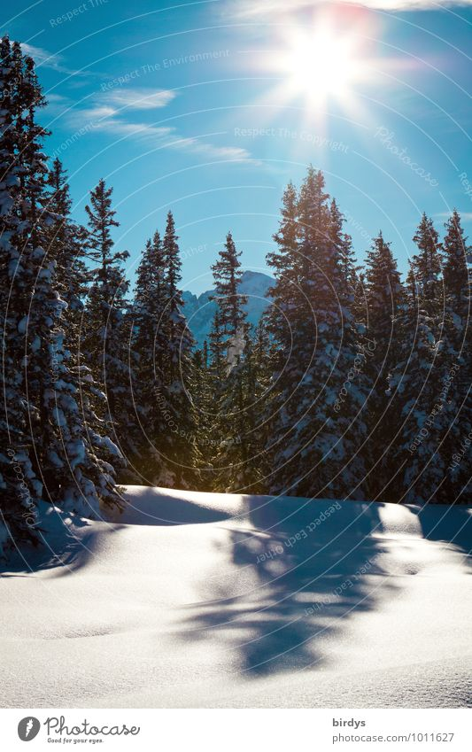 winter Nature Landscape Sky Cloudless sky Sun Sunlight Winter Beautiful weather Snow Fir tree Forest Mountain Illuminate Esthetic Friendliness Fresh Bright