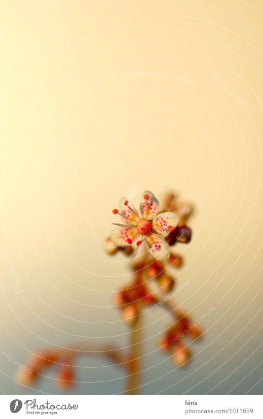 filigree Flower Blossom Blossoming Nature Individual Deserted