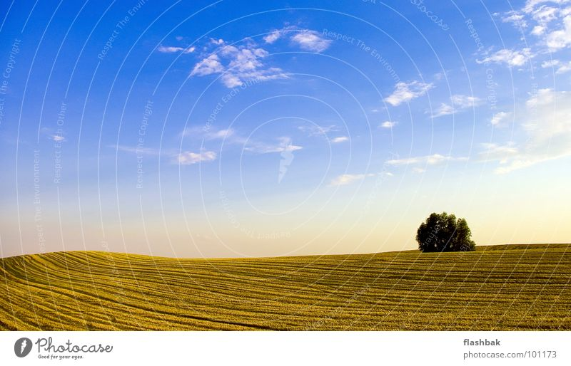 binoculars Field Clouds Tree Yellow Green Summer Sky Landscape Blue Harvest behind the house on the left side no combine harvester there