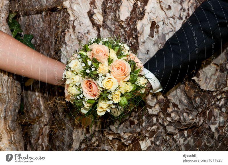 High-time s-photo Design Joy Happy Nature Plant Flower Foliage plant Wood Sign Love Esthetic Beautiful Hope Colour photo Day