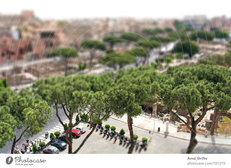 Human being Green City Brown Small Italy Monument Ruin Landmark Surrealism Tourist Rome Miniature Tilt-Shift