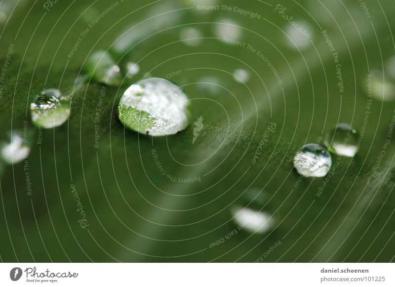 raindrop Leaf Rain Round Glittering Plant Growth Green Background picture Abstract White Transparent Clarity Macro (Extreme close-up) Close-up Water Sphere