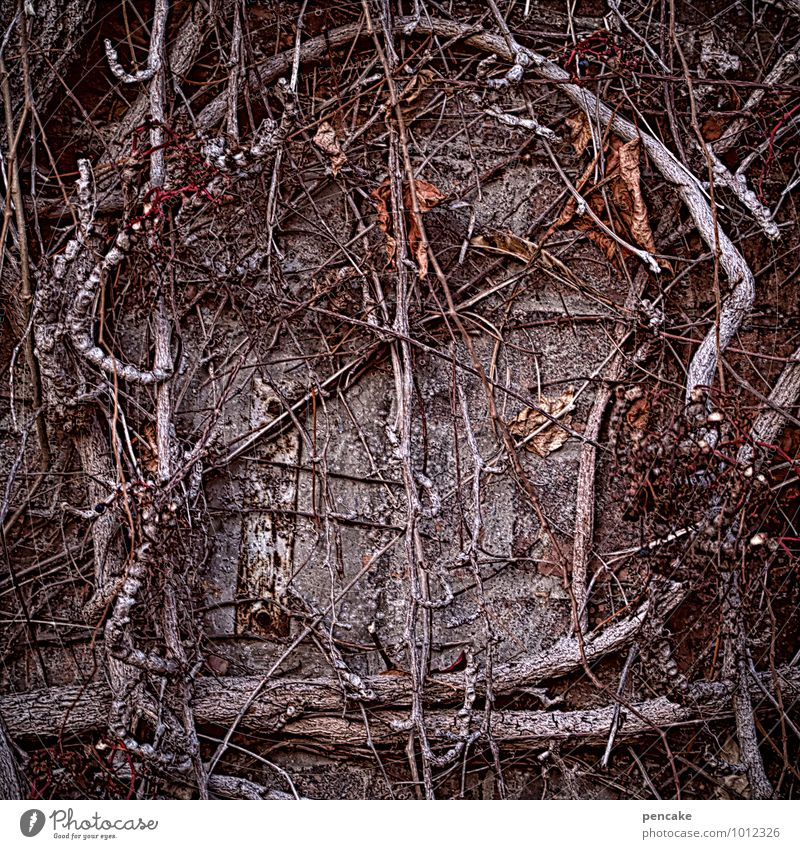 Nature Old Naked Plant Loneliness Winter Dark Window Wall (building) Wall (barrier) Dream Threat Future Transience Sign Hope