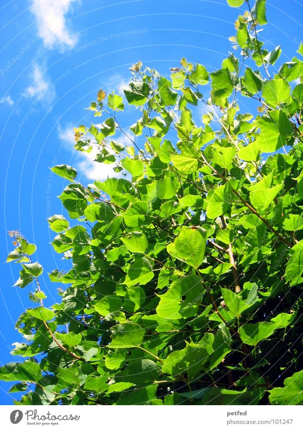 Nature Sky Tree Green Blue Summer Joy Clouds Yellow Spring Garden Weather Branch Tree trunk God Deities