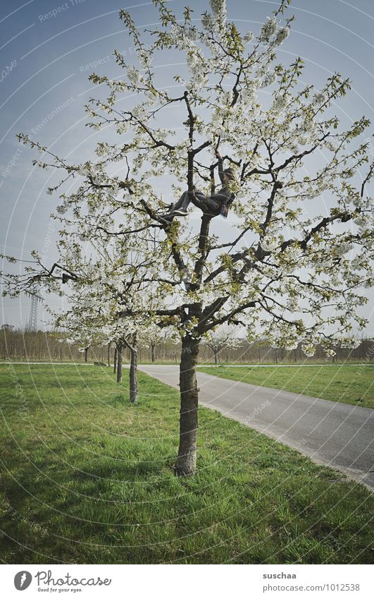 another herald Environment Nature Sky Spring Climate Weather Beautiful weather Tree Grass Field Free Climbing Blossom Cherry tree Apple tree Lanes & trails