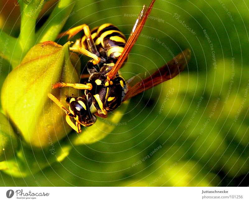 Nature Green Summer Flower Black Yellow Garden Blossom Fear Flying Dangerous Wing Insect Crawl Panic Calculation