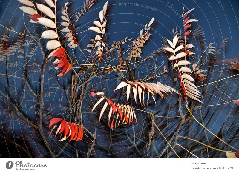 Sky Blue Tree Red Leaf Autumn Branch Twig Muddled Branchage Night sky