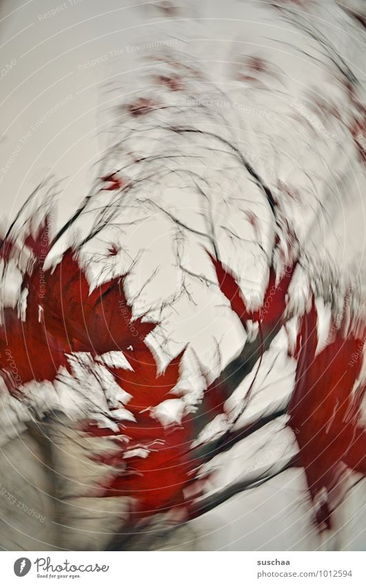 800 .. Environment Sky Autumn Climate Gale Plant Tree Leaf Village Crazy Wild Red Rotate Dynamics Political movements Branch Colour photo Exterior shot