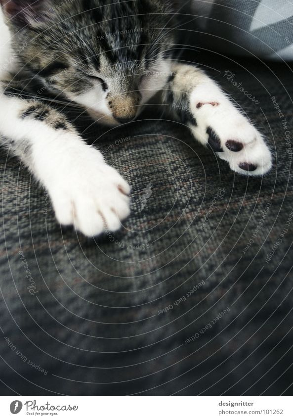 Cat Warmth Small Sleep Sweet Physics Hot Fatigue Cute Mammal Paw Completed Exhaustion Claw Lifeless