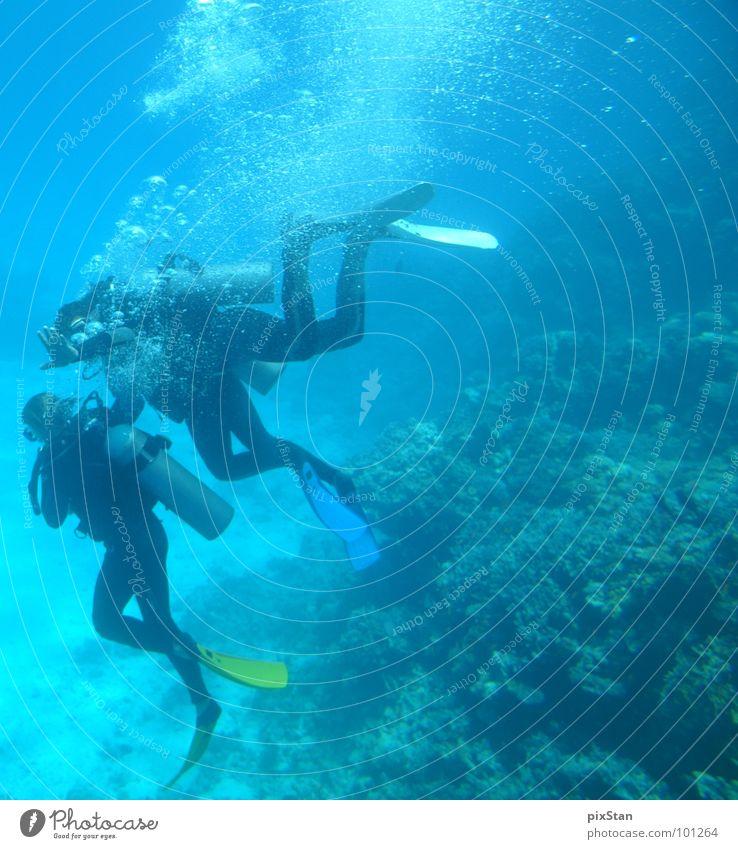 Water Ocean Blue Fish Dive Air bubble Water wings Aquatics Diver Coral