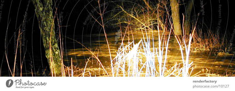 luminescent grass Grass Bushes Tree Night Light Nature River Plant Water