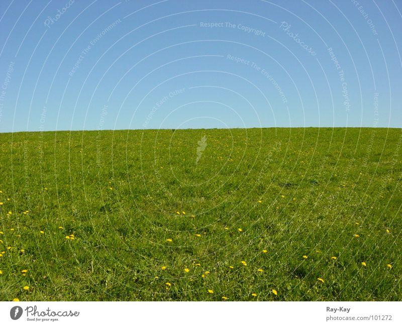 On the edge of the horizon Meadow Horizon Grass Green Beautiful Sky Nature Landscape Blue