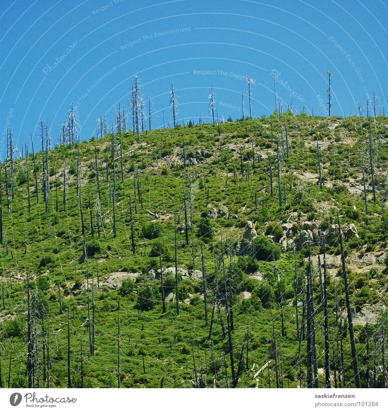Nature Sky Green Blue Meadow Landscape Blaze Dangerous USA Threat Burn Tree trunk Beautiful weather Slope Incline Forest fire