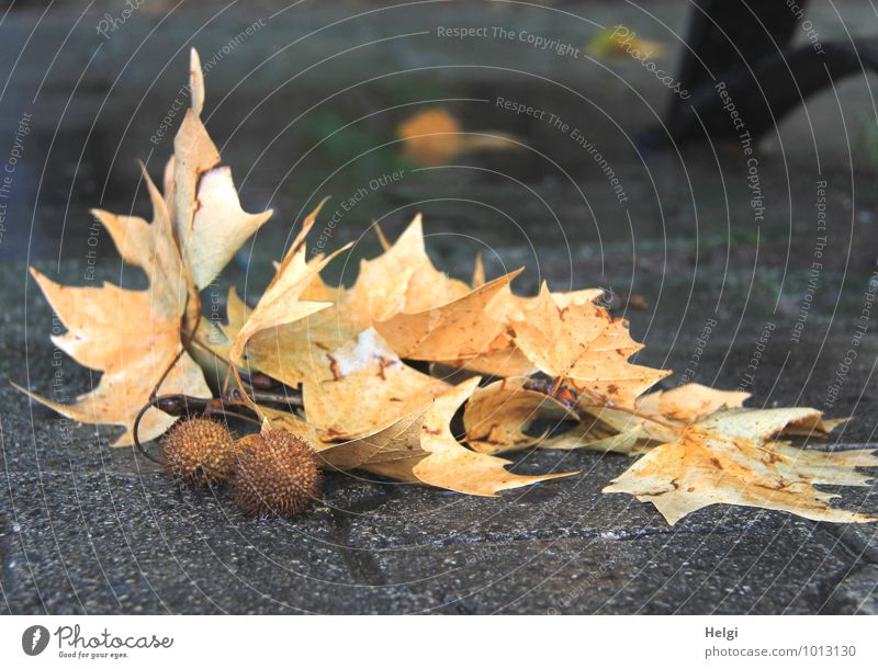 Nature Old Plant Leaf Calm Yellow Life Autumn Natural Lanes & trails Gray Brown Moody Lie Authentic Transience