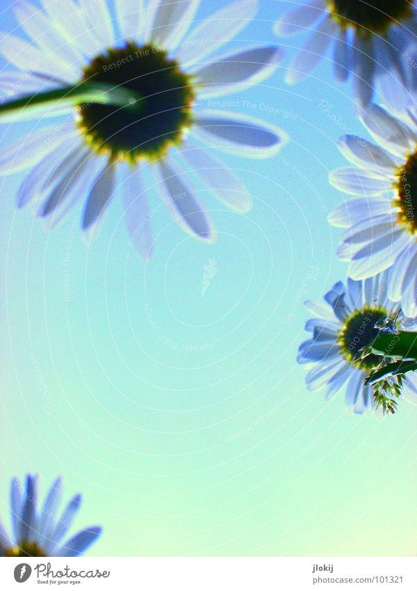 Sky Nature Blue Green Plant Sun Summer Meadow Grass Movement Spring Lamp Wind Field Glittering Growth