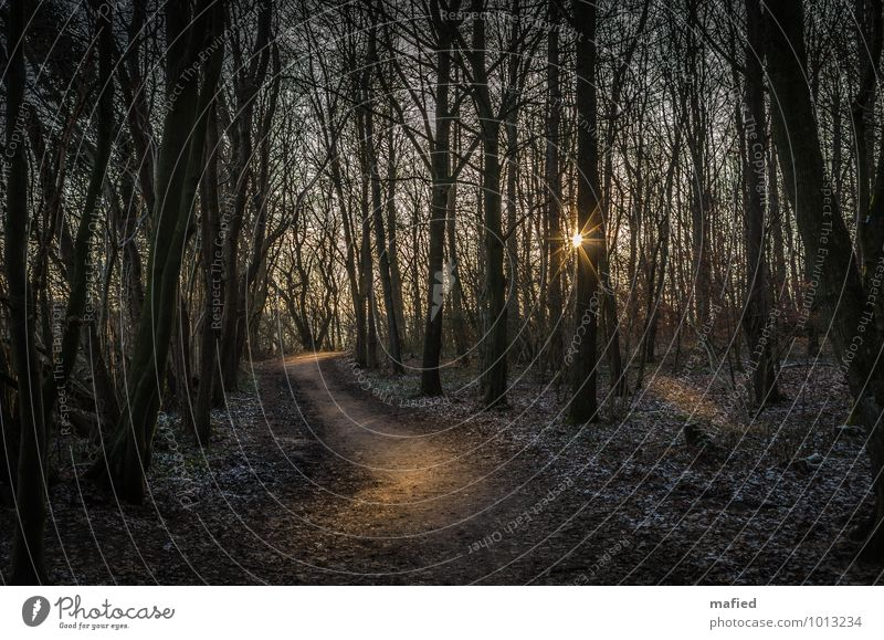 forest path Nature Sunlight Winter Tree Forest Hiking Brown Gold Green Calm To go for a walk Footpath Colour photo Exterior shot Day Light Shadow Sunbeam