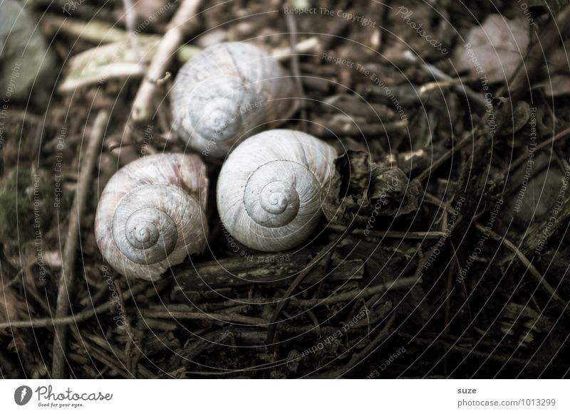 house arrest Environment Nature Animal Earth Autumn Wild animal Snail 3 Sadness Dry Brown Emotions Moody Grief Death Loneliness Stagnating Survive Decline Past