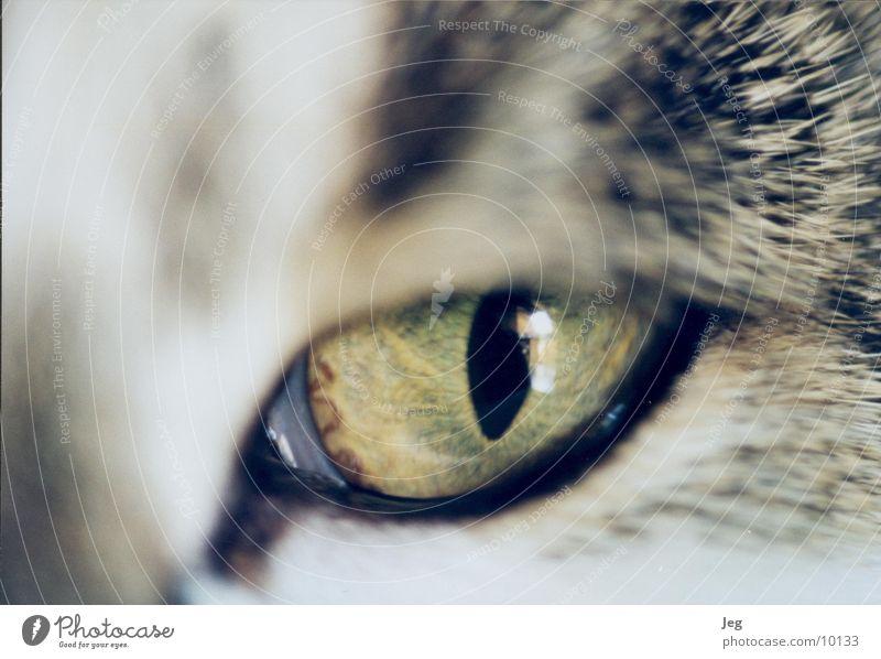 Henriette's Eye Cat Animal Macro (Extreme close-up) Close-up Eyes