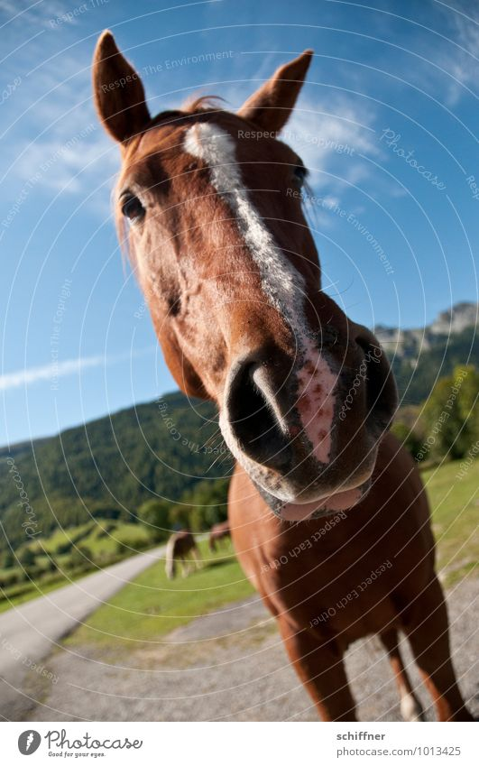 Well? Still fasting? Animal Pet Farm animal Horse Animal face 1 3 Group of animals Looking Astute Funny Snout Ear Beautiful weather Mountain Landscape Pyrenees