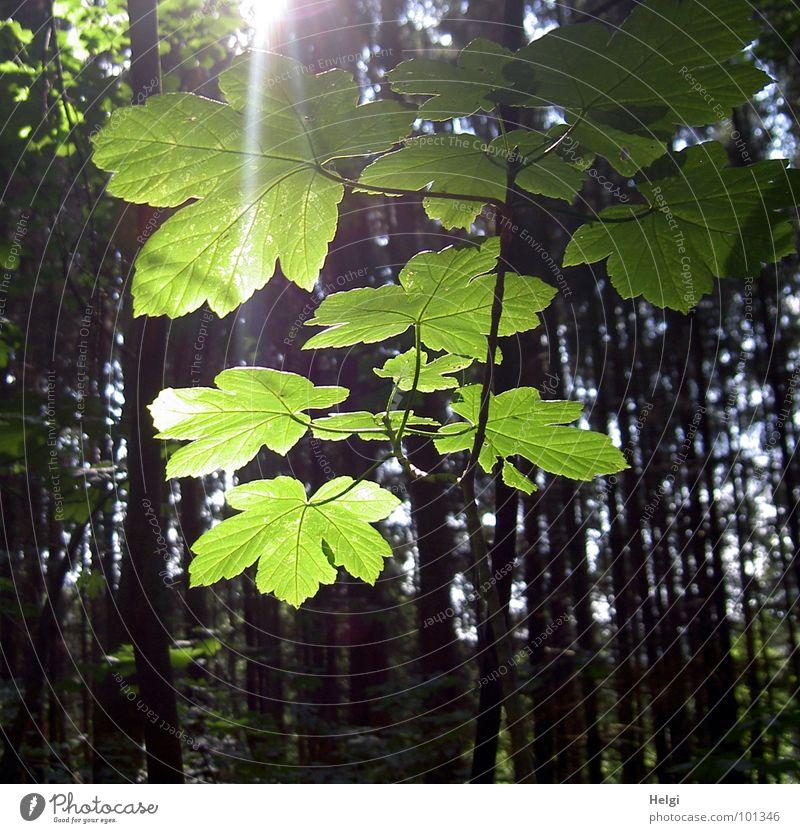 Tree Sun Green Blue Summer Joy Leaf Yellow Forest Lamp Brown Lighting Branch Tree trunk Twig Maple tree
