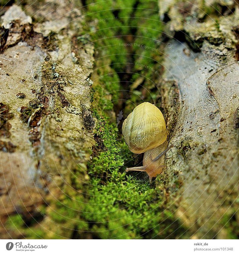 Green Calm Yellow Garden Park Speed Anger Tree trunk Furrow Snail Feeler Crawl Alley Tree bark Slowly Hollow