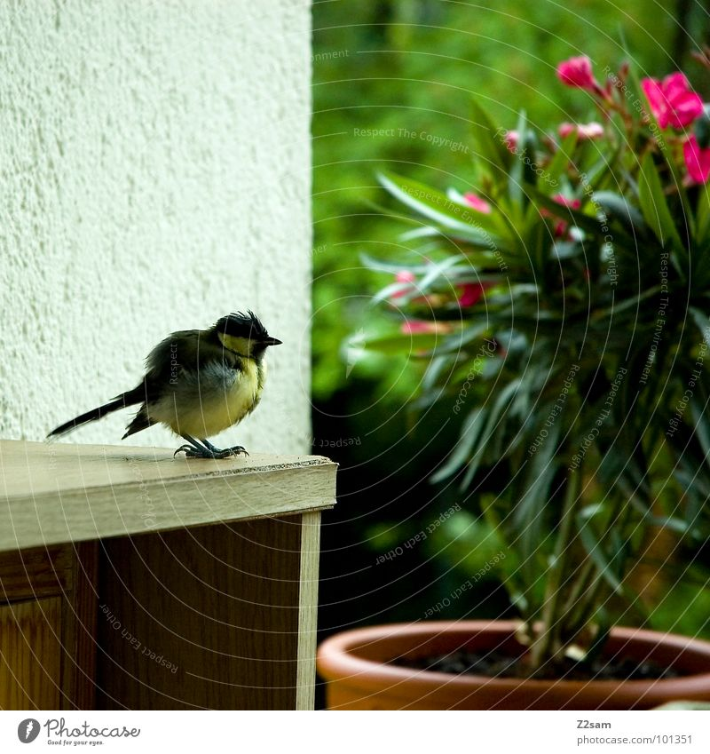 vogerl Bird Balcony Flower Plant Wood Cupboard Flowerpot Green Tree Wall (building) Sweet Small Feather Yellow Claw Stand Animal Cute Sit Wing Flying Relaxation