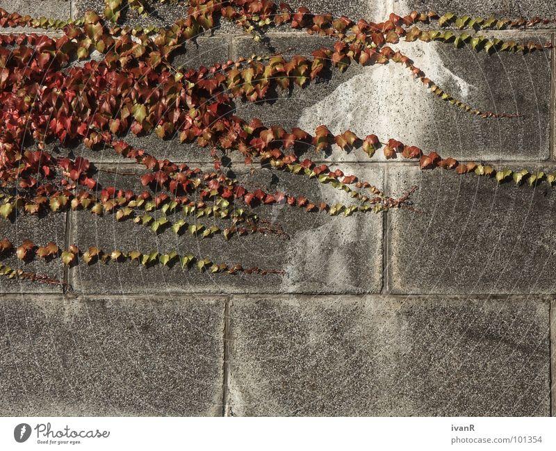 Nature Plant Red Wall (building) Gray Stone Concrete Derelict Converse Bremen
