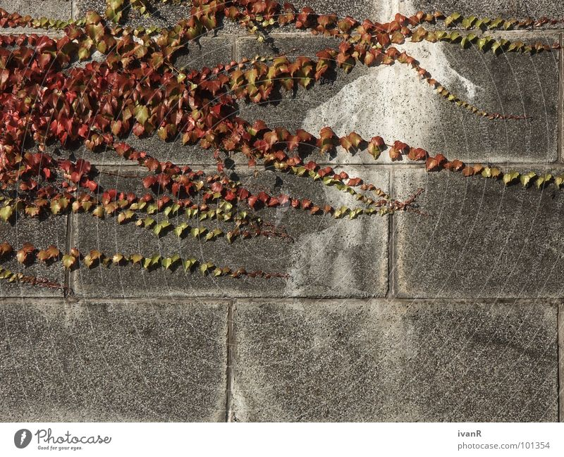 propagation Wall (building) Bremen Concrete Plant Converse Exterior shot Gray Red Derelict Stone Nature