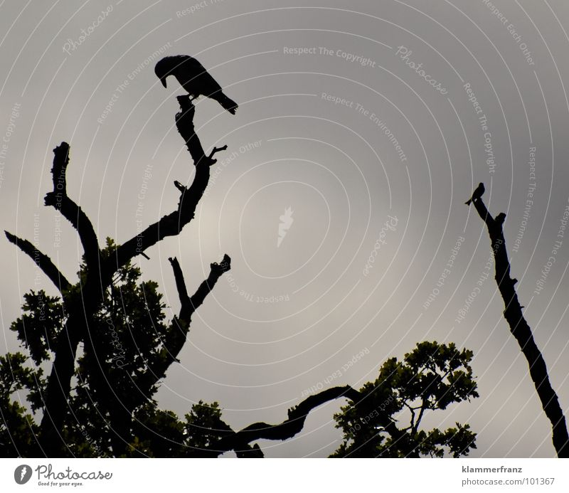 Old Sky White Tree Calm Leaf Black Clouds Far-off places Life Dark Gray Sadness Graffiti Moody Bird