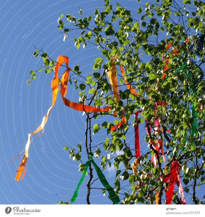 maypole Sky Spring Wind Tree Jewellery Sign Blue Green May tree Paper chain Judder Paper streamers Birch tree Treetop Cloudless sky Copy Space left Deserted