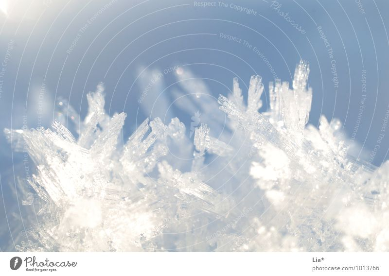 Ice crystals II Winter Frost Snow Cold Blue White Snow crystal Frozen Winter mood Growth Crystal structure Glittering Shallow depth of field Copy Space top