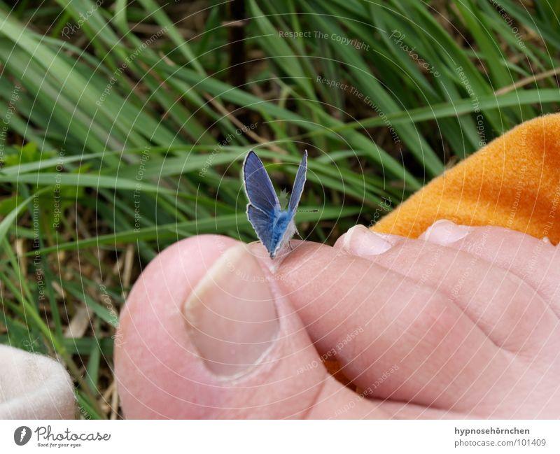 Nature Green Blue Grass Feet Orange Butterfly Toes